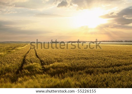Rural landscape at dawn with the sun over the fields. Picture taken in June. - stock photo