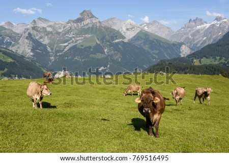 Rural landscape at the village of Engelberg on the Swiss alps #769516495