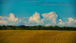Rural landscape blue sky, mown wheat field, deciduous forest. Summer season, August. Background for design. Ukraine. Europe. Web banner.