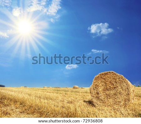 Rural landscape. Bright sun over the field at summer.