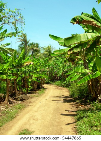 rural landscape common dirt road through banana plantation grove Big Corn Island Nicaragua Central America