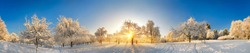 Rural landscape enchanted by snow and the gold winter sun rising, an extra wide panorama with blue sky