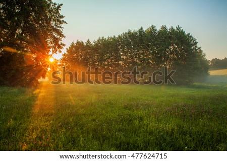 rural landscape, field and grass - Shutterstock ID 477624715