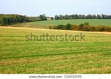 Rural landscape in early autumn. Fields, forest, sky. On the foreground cereals sown field