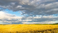 Rural landscape in province of Alberta with harvested hay and cereal fields and hay bales