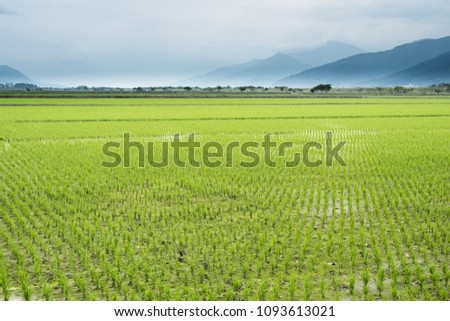 rural landscape of green paddy farm #1093613021