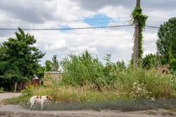 Rural landscape of overgrown village street with cloudscape above. Street dog at dirt country road. Summer view in countryside of Ukraine.