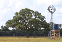 Rural landscape scenery in Texas, United States of America. Oak tree and windmill on farmland, Texan Ranch, Lone Star State.