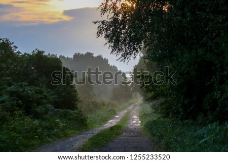 Rural landscape with empty countryside dirt wet road. Dirt road leading through foggy forest in Kemeri. Puddles on the country road in Latvia. Puddles on the country woods road in misty morning. #1255233520