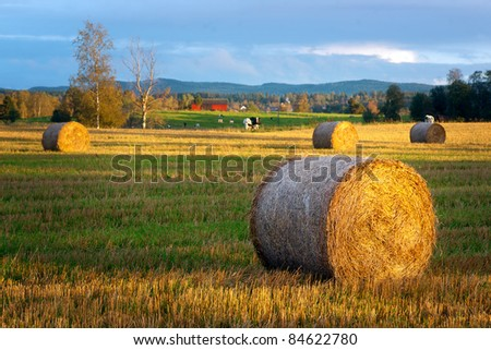 Rural landscape with hay bale in foreground and cows in background
