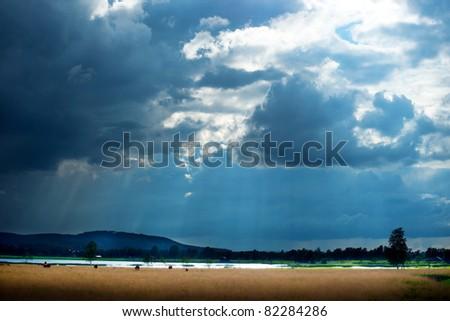 Rural landscape with herd of grazing cows under rain cloud