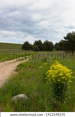 Rural landscape with rural road, yellow, flowering wild radish and boulders #1412548535