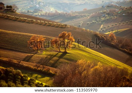 Rural landscape with trees in autumn