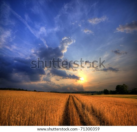 Rural landscape with wheat field on sunset