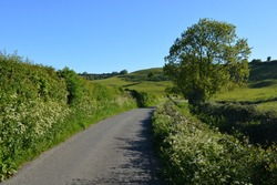 Rural lane in early summer with wildflowers in the hedgerows, near Poyntington, Sherborne, Dorset, England