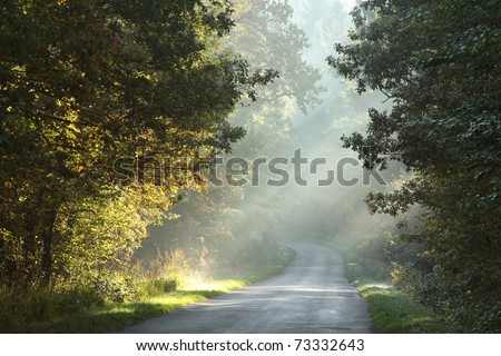 Rural lane running through the deciduous forest on a foggy morning.