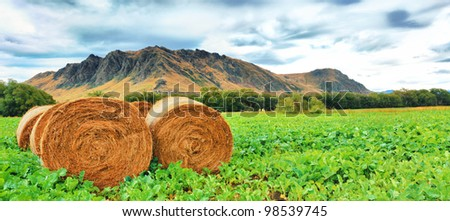Rural lanscape. Golden Hay Bales on the foreground