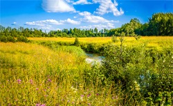 Rural meadow creek in sunny day. Summer meadow creek landscape. Meadow creek view