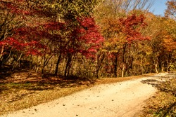 Rural mountain road lined with trees in beautiful autumn colors.
