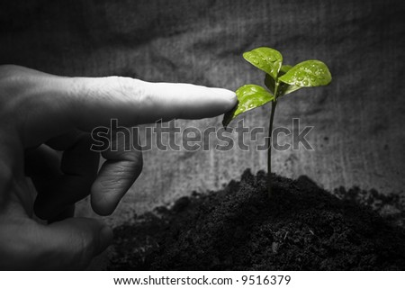 Rural natural image: male finger touching the green wet plant. Environmental conceptual image. Focus on a plant.