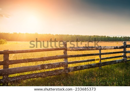 Rural nature at sunset. Beautiful summer landscape with field and forest