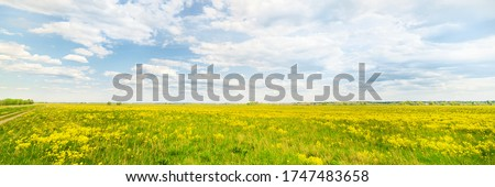 Rural panoramic landscape in Russia. Green field, horizon and cloudscape at sunny day wide angle view.