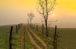 Rural path in the early foggy morning. Early morning fog on rural path. Rural path in foggy morning. Early morning fog on pathway
