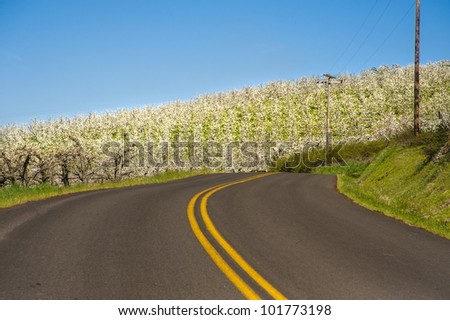 Rural road among apple orchards of Hood River Valley