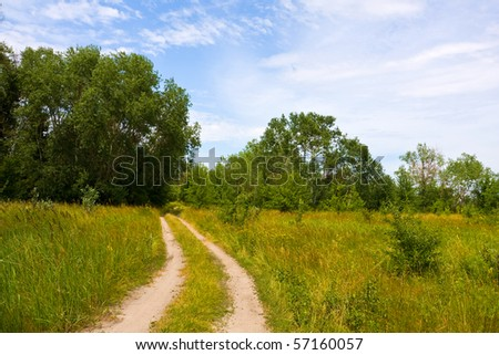 Rural road among meadow in forest