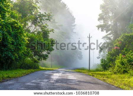 Rural road among the Cuban mountains, exhuberant vegetation scenery with heavy fog despite being late in the morning.