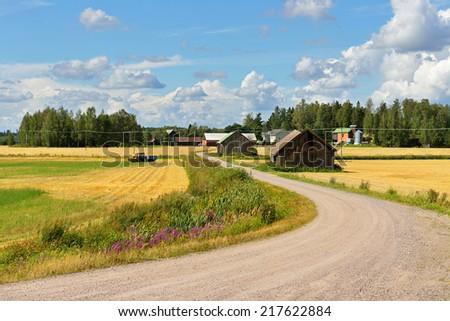 Rural road between fields of rye #217622884