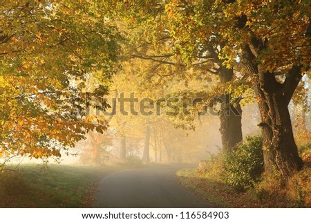 Stock Photo Rural road in a misty autumn morning.