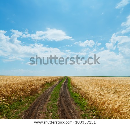 rural road in golden agricultural field under cloudy sky