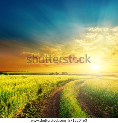 rural road in green grass and orange sunset #571830463