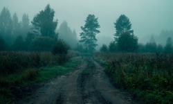 Rural road in the fog before dawn in the forest. Scary atmosphere of Halloween and sleepy hollow