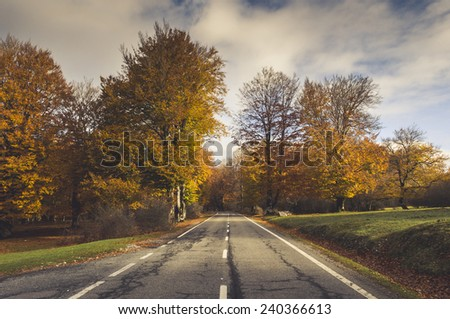 Rural road in the forest in autumn, fall colors and leaves everywere
