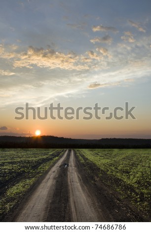 Rural road in the green field. Way to the sun. Summer sunset above field