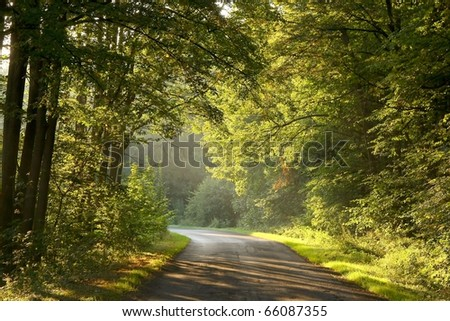 Rural road leading through the picturesque forest at the end of summer.
