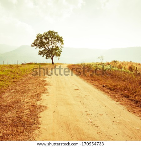 rural road leading to the tree...