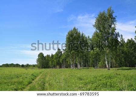 rural road near birch wood - stock photo