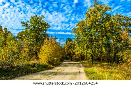 Rural road on a clear autumn day. Forest road in autumn. Autumn forest road