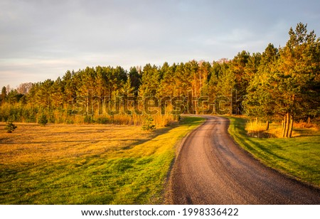 Rural road on an autumn day. Autumn rural road. Rural road in autumn nature landscape. Autumn road view