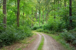 Rural road (pathway) through the hills of green beech forest. Mighty trees. Natural tunnel. Atmospheric summer landscape. Rhineland, Germany. Nature, ecology, environmental conservation, ecotourism