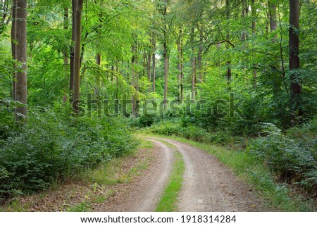 Rural road (pathway) through the hills of green beech forest. Mighty trees. Natural tunnel. Atmospheric summer landscape. Rhineland, Germany. Nature, ecology, environmental conservation, ecotourism Stock photo ©