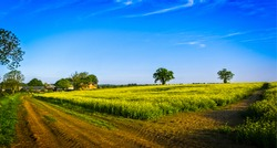 Rural road through a field in summer. Panorama of rural field road. Rural field road panoramic landscape. Village road panorama