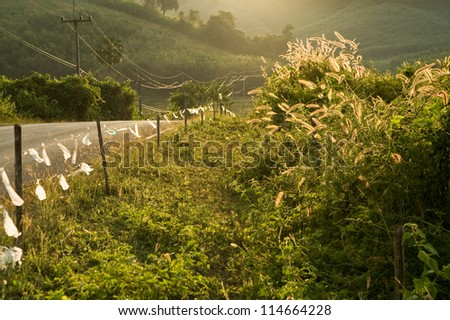 Rural road through fields with green herbs and sunlight with clouds.