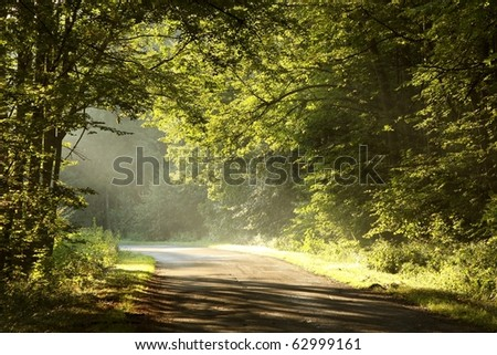 Rural road through rich deciduous forest illuminated by the morning sunlight.