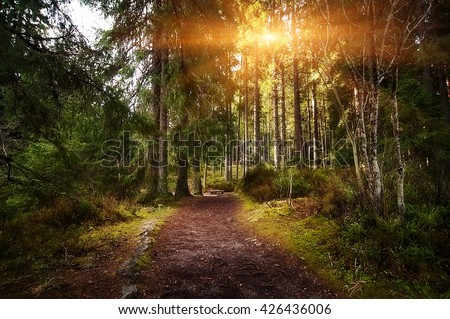 rural road through the deep green forest. natural summer background #426436006