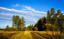 Rural road to forest landscape. Trail to forest. Forest trail view. Forest nature trail landscape