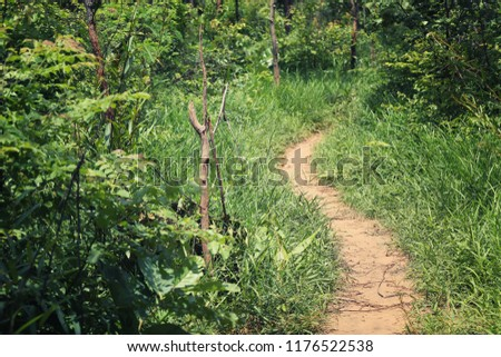 Rural Road to the forest with trees on both sides during the daytime. #1176522538